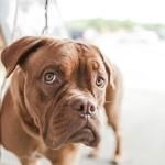 Hund - bildhafter Ausdruck