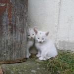Katzen - Miau