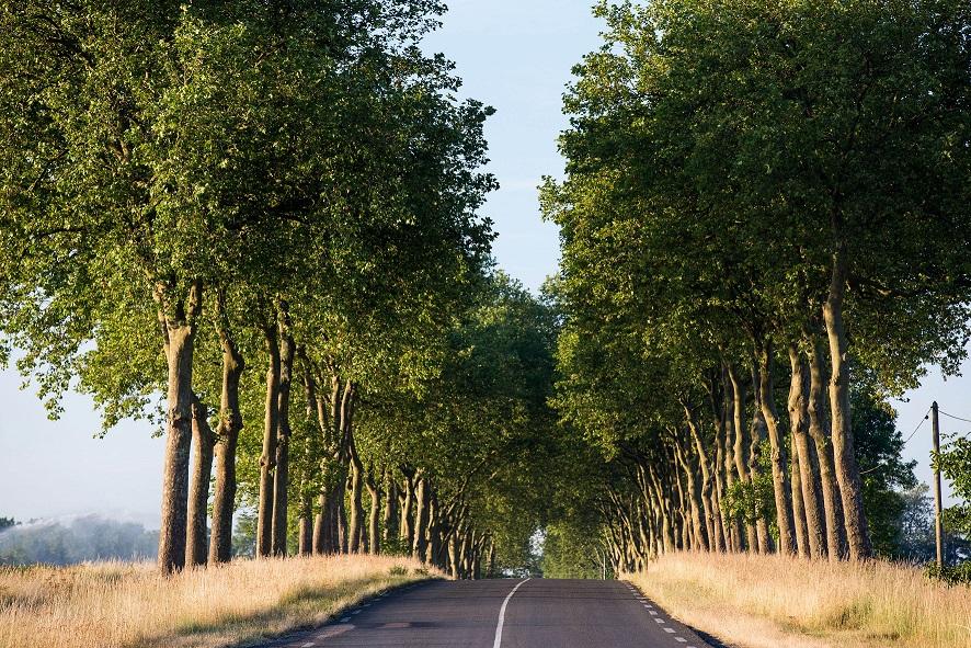Grüne Alleebäume säumen die Route Nationale 7